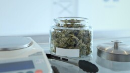 Cannabis in a jar waiting to be portioned out for a sale.
